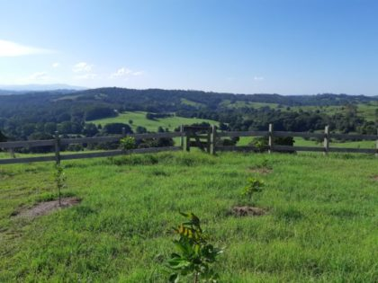 Veiws of Bangalow Hinterland Trail Ride